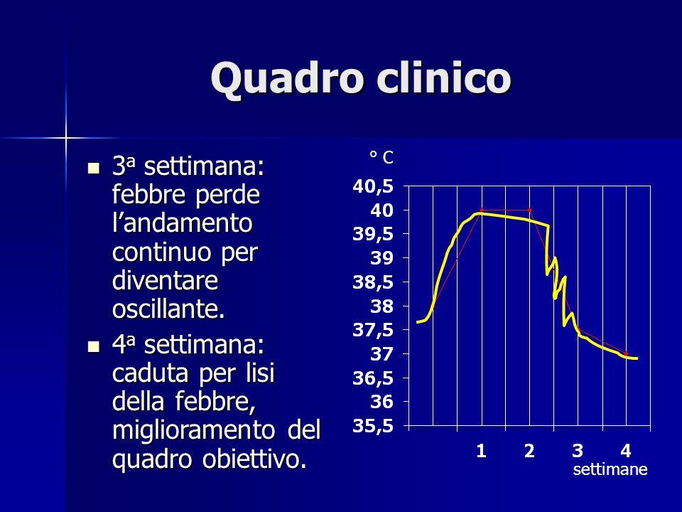 Quadro clinico 3 a settimana: febbre perde l'andamento continuo per diventare oscillante.