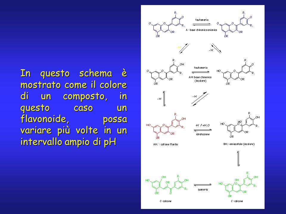 In questo schema è mostrato come il colore di un composto, in questo caso un flavonoide, possa variare più volte in un intervallo ampio di pH
