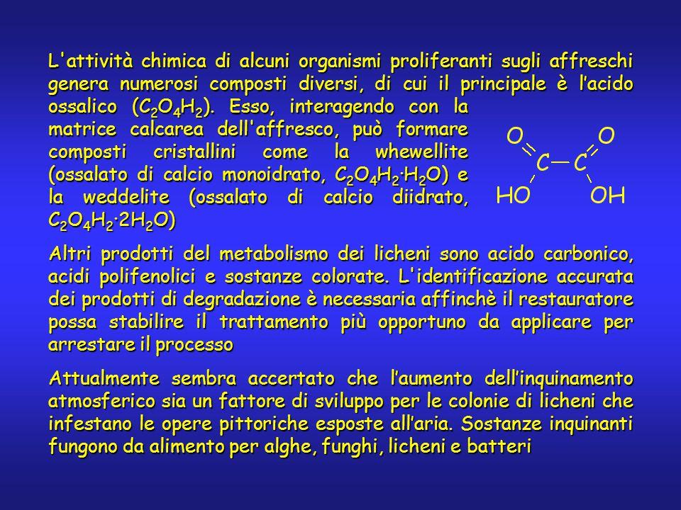 L attività chimica di alcuni organismi proliferanti sugli affreschi genera numerosi composti diversi, di cui il principale è l'acido ossalico (C 2 O 4 H 2 ).