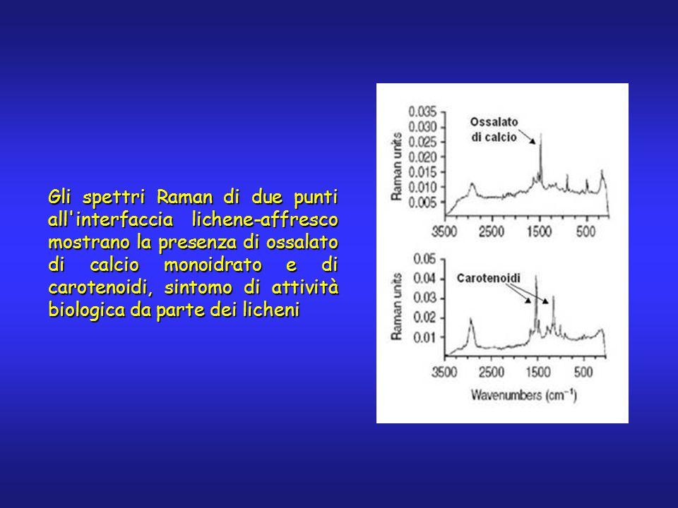 Gli spettri Raman di due punti all interfaccia lichene-affresco mostrano la presenza di ossalato di calcio monoidrato e di carotenoidi, sintomo di attività biologica da parte dei licheni