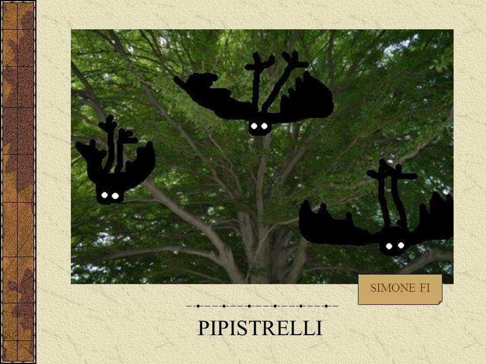 PIPISTRELLI SIMONE FI
