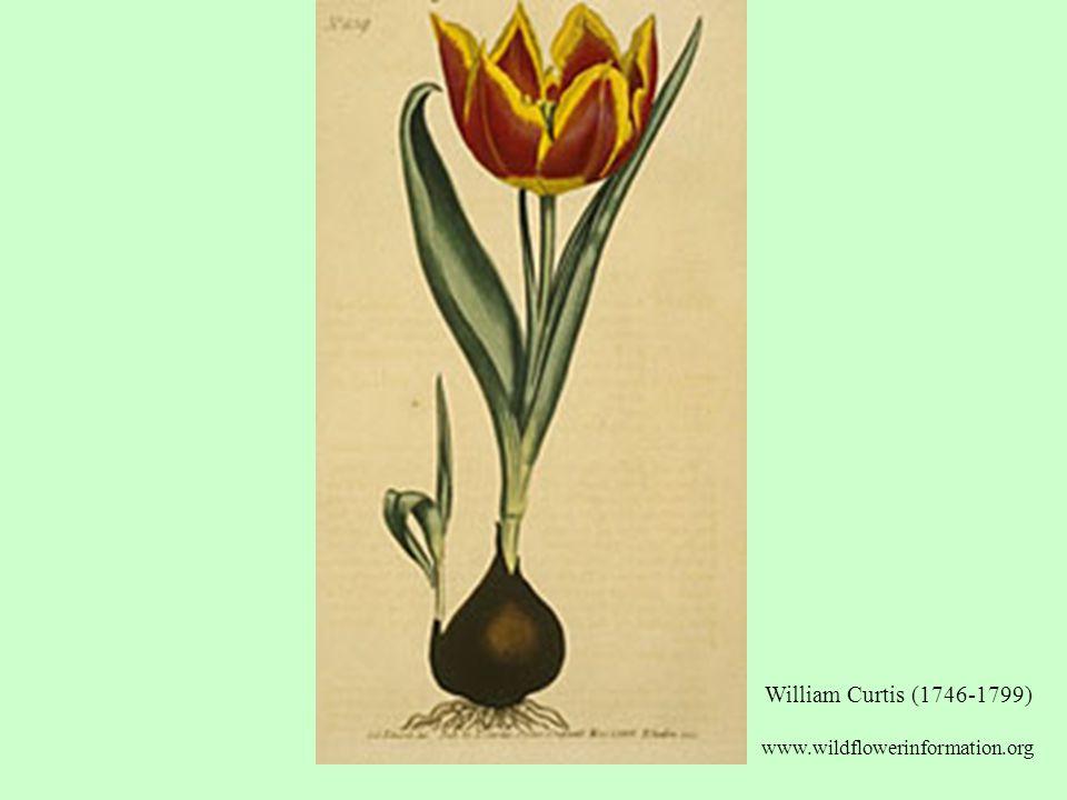 William Curtis (1746-1799) www.wildflowerinformation.org