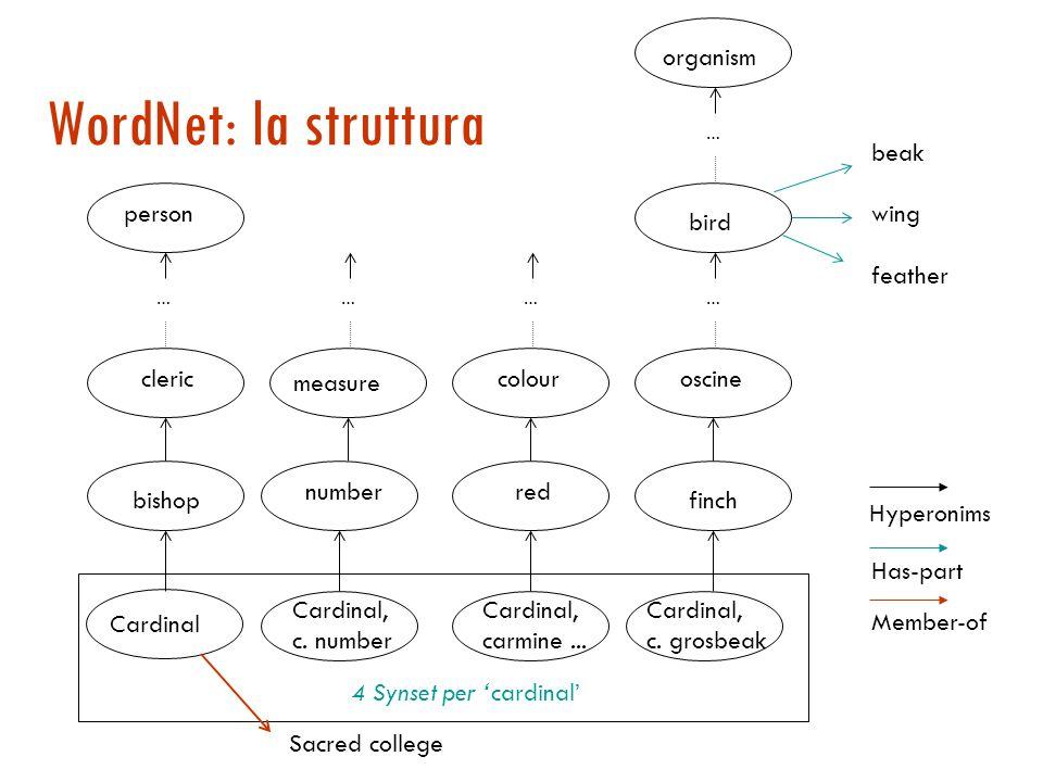 WordNet [Miller]  Grossa risorsa lessicale organizzata a rete semantica (122.000 termini)  i nomi, i verbi, gli aggettivi, gli avverbi sono organizzati in insiemi di sinonimi (synset) che rappresentano un concetto (99.000 synset);  Ad una parola è tipicamente associato un insieme di synset: i sensi della parola  http://cogsci.princeton.edu/~wn/online