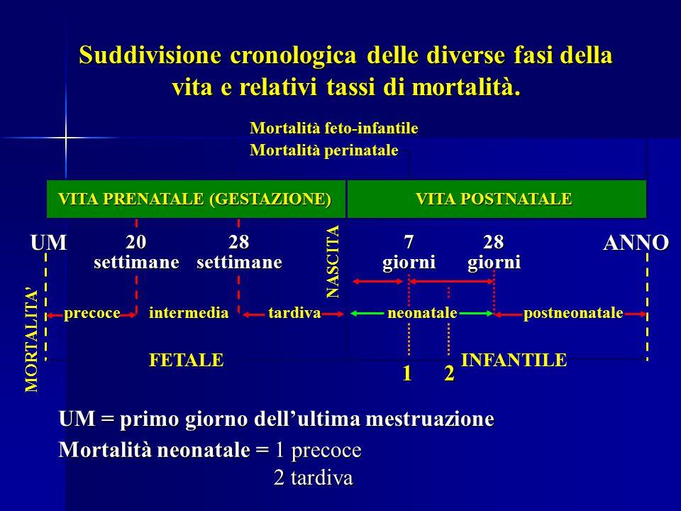 Suddivisione cronologica delle diverse fasi della vita e relativi tassi di mortalità. UMANNO Mortalità perinatale Mortalità feto-infantile 28 settiman