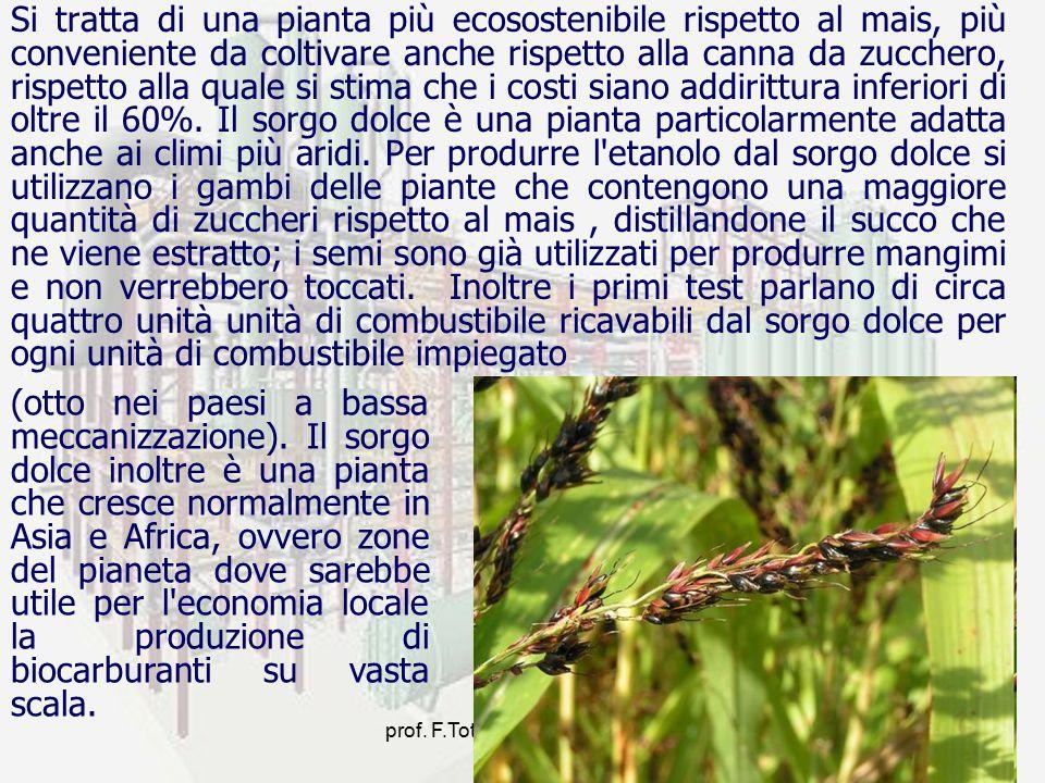 prof. F.Tottola IPSIA E. FERMI11 Si tratta di una pianta più ecosostenibile rispetto al mais, più conveniente da coltivare anche rispetto alla canna d