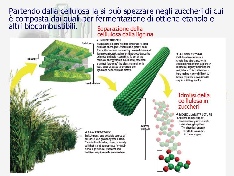 prof. F.Tottola IPSIA E. FERMI13 Partendo dalla cellulosa la si può spezzare negli zuccheri di cui è composta dai quali per fermentazione di ottiene e