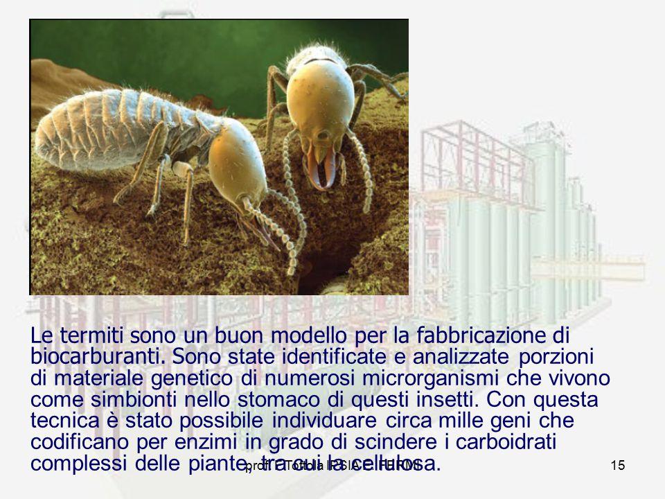 prof. F.Tottola IPSIA E. FERMI15 Le termiti sono un buon modello per la fabbricazione di biocarburanti. S ono state identificate e analizzate porzioni
