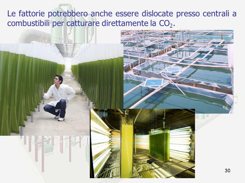 prof. F.Tottola IPSIA E. FERMI30 Le fattorie potrebbero anche essere dislocate presso centrali a combustibili per catturare direttamente la CO 2.