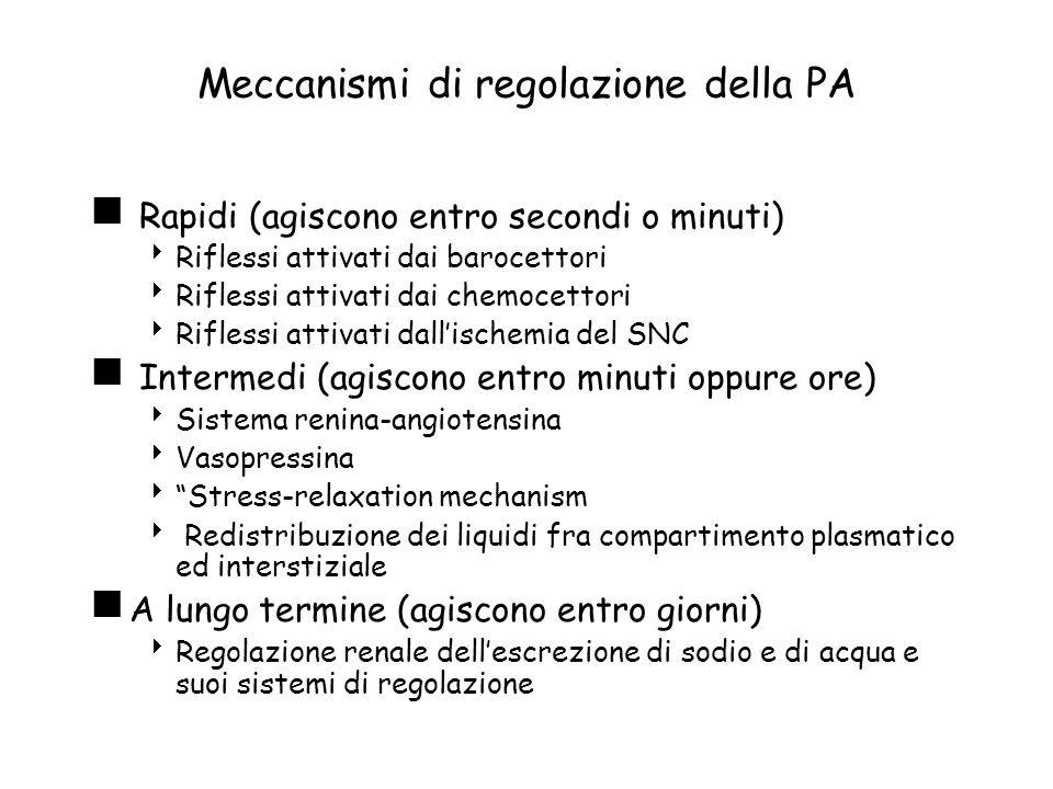 Ipertensione e rene