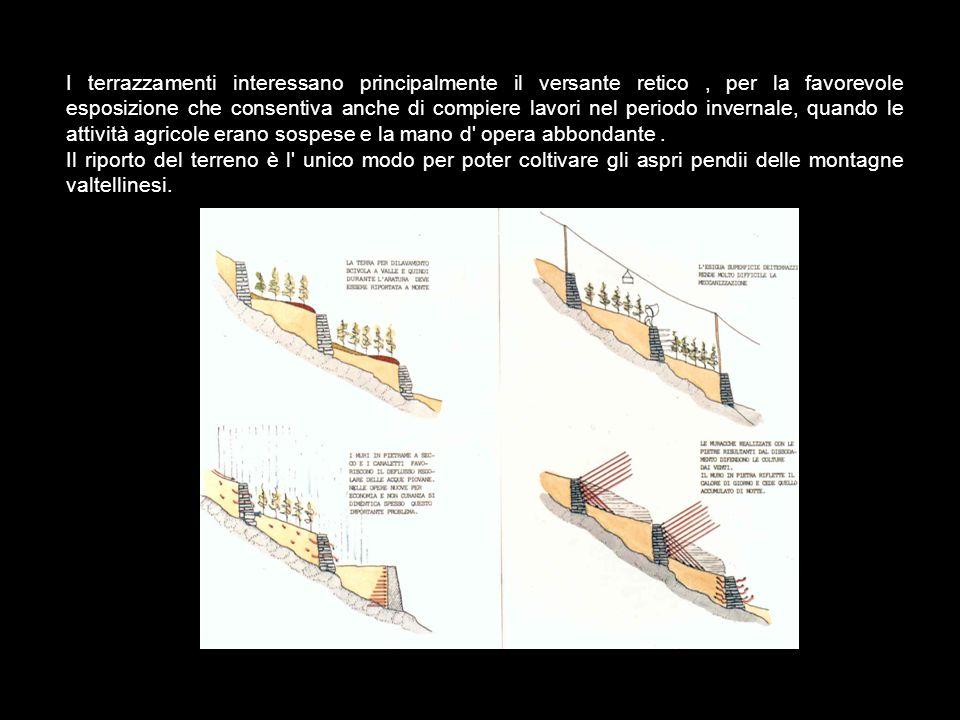 STRUTTURE DELLA PRODUZIONE Terrazzamenti L importanza storica dei terrazzamenti è molto rilevante;infatti, da essi è in gran parte dipeso il sostentamento della media valle.
