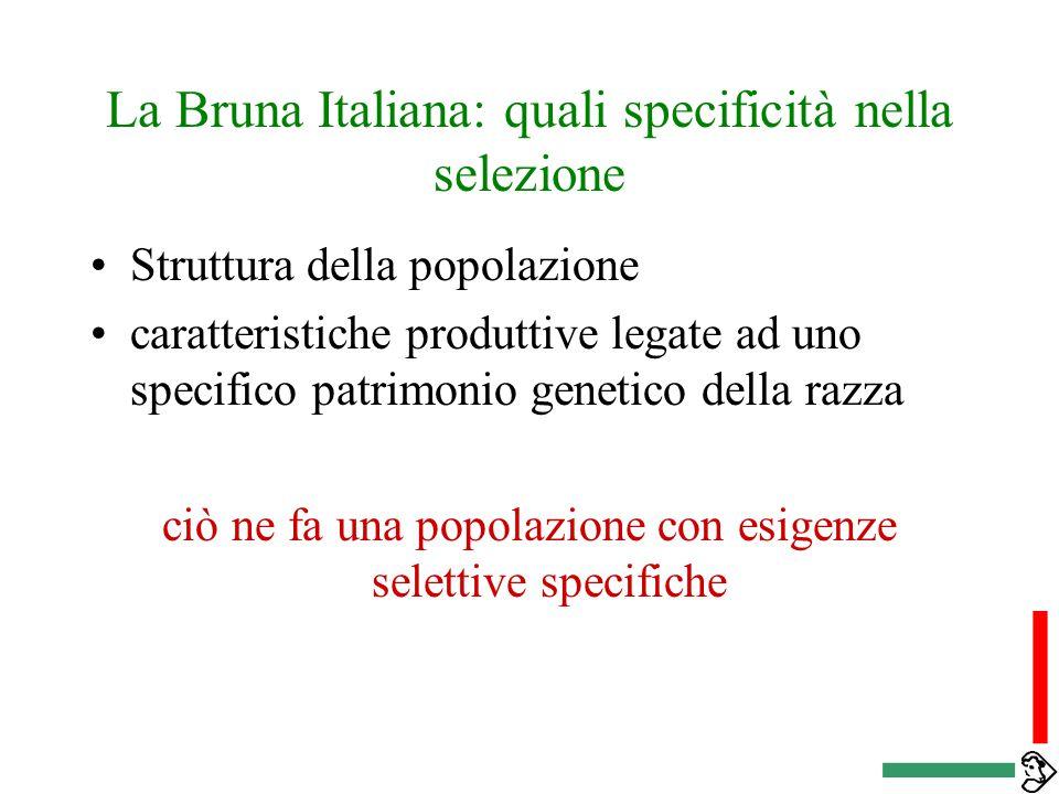 La Bruna Italiana: quali specificità nella selezione Struttura della popolazione caratteristiche produttive legate ad uno specifico patrimonio genetico della razza ciò ne fa una popolazione con esigenze selettive specifiche