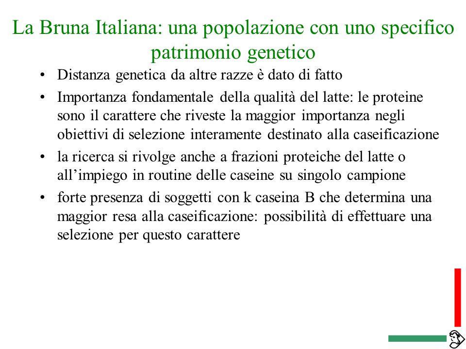 La Bruna Italiana: quali specificità nella selezione Struttura della popolazione caratteristiche produttive legate ad uno specifico patrimonio genetic