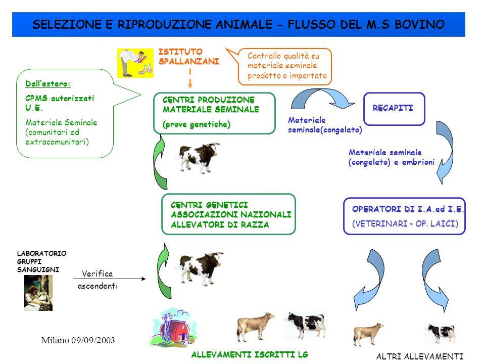 Milano 09/09/200336 SELEZIONE E RIPRODUZIONE ANIMALE - FLUSSO DEL M.S BOVINO ALLEVAMENTI ISCRITTI LG LABORATORIO GRUPPI SANGUIGNI CENTRI GENETICI ASSO