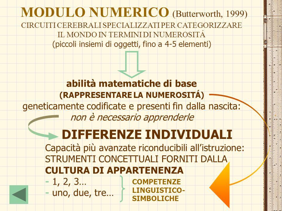 MODULO NUMERICO (Butterworth, 1999) CIRCUITI CEREBRALI SPECIALIZZATI PER CATEGORIZZARE IL MONDO IN TERMINI DI NUMEROSITÁ (piccoli insiemi di oggetti,