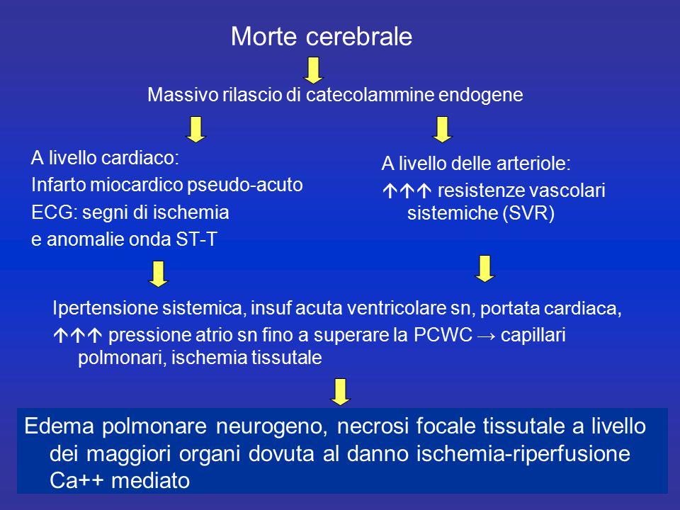 Deterioramento assetto endocrino ↓T3 e T4, ↑rT3,TSH normale: Euthyroid Sick Syndrome (ESS) comune nei soggetti in condizione di grave shock, ↓cortisolo, insulina ed ADH ↓ substrati energetici fosforilati e glicogeno, ↑ ↑ lattati.