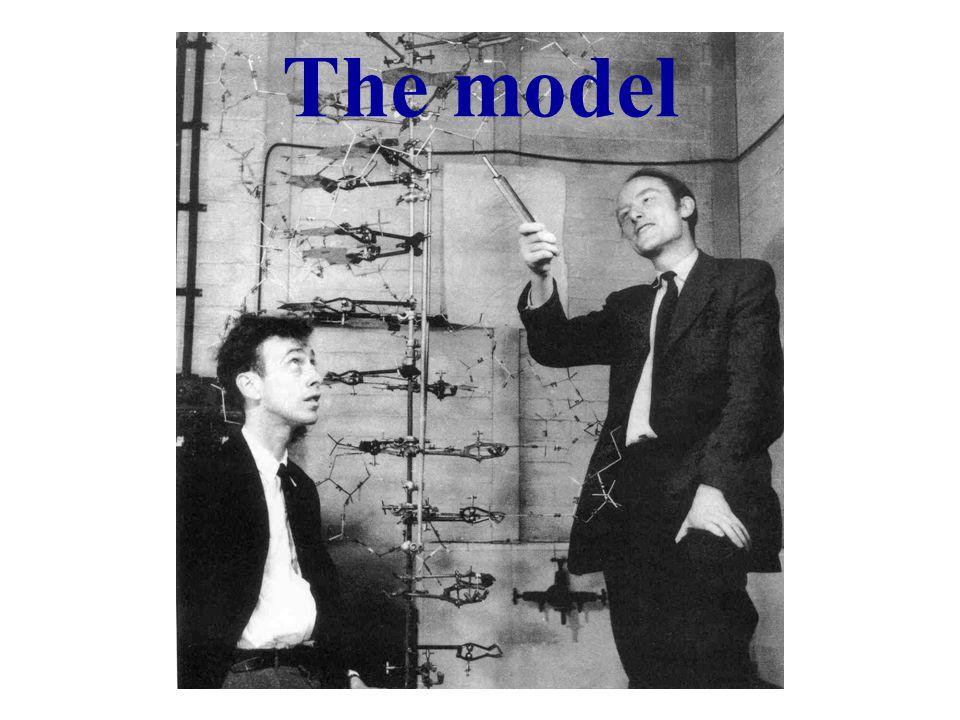 B0B0 M0M0 E =  B 0 E =   mB 0  :m = +½    +½   E   ½   B 0  :m =  ½    ½   E   ½   B 0 M 0 =  = M z M x = M y = 0 La frequenza di precessione di Larmor Poiche il numero dei momenti magnetici allineati con il campo magnetico é leggermente maggiore di quelli anti allineati la risultante é un vettore magnetizzazione M allineato lungo l'asse z La differenza tra le due popolazioni é tanto maggiore quanto piu' elevata e la differenza di energia tra i due livelli