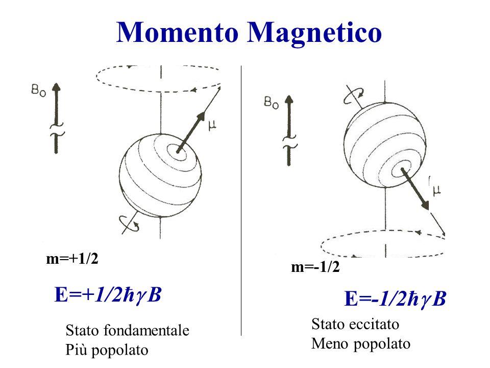 Momento Magnetico m=+1/2 m=-1/2 E=+1/2ħ  B E=-1/2ħ  B Stato fondamentale Più popolato Stato eccitato Meno popolato