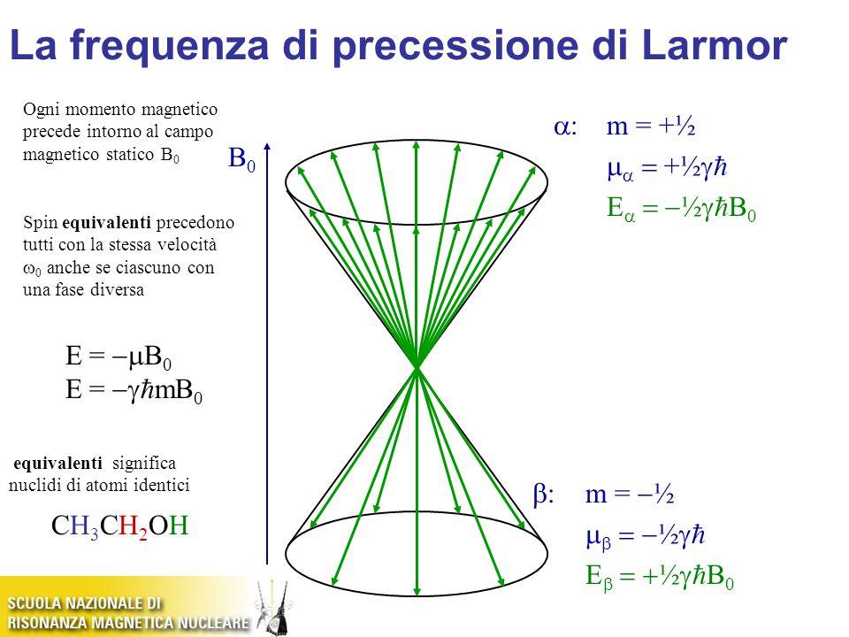 B0B0 E =  B 0 E =   mB 0  :m = +½    +½   E   ½   B 0  :m =  ½    ½   E   ½   B 0 Ogni momento magnetico precede intorno al campo magnetico statico B 0 Spin equivalenti precedono tutti con la stessa velocità  0 anche se ciascuno con una fase diversa equivalenti significa nuclidi di atomi identici CH3CH2OHCH3CH2OH La frequenza di precessione di Larmor