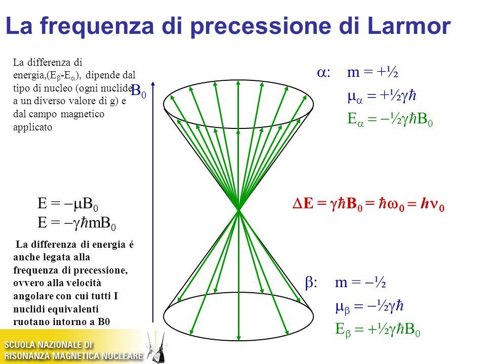 B0B0 E =  B 0 E =   mB 0  :m = +½    +½   E   ½   B 0  :m =  ½    ½   E   ½   B 0  E =   B 0 =     h  La differenza di energia,(E  -E  ), dipende dal tipo di nucleo (ogni nuclide a un diverso valore di g) e dal campo magnetico applicato La differenza di energia é anche legata alla frequenza di precessione, ovvero alla velocità angolare con cui tutti I nuclidi equivalenti ruotano intorno a B0 La frequenza di precessione di Larmor