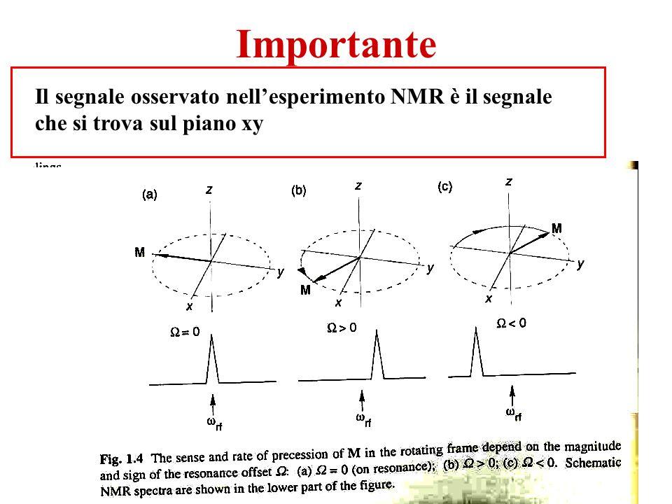 Importante Il segnale osservato nell'esperimento NMR è il segnale che si trova sul piano xy