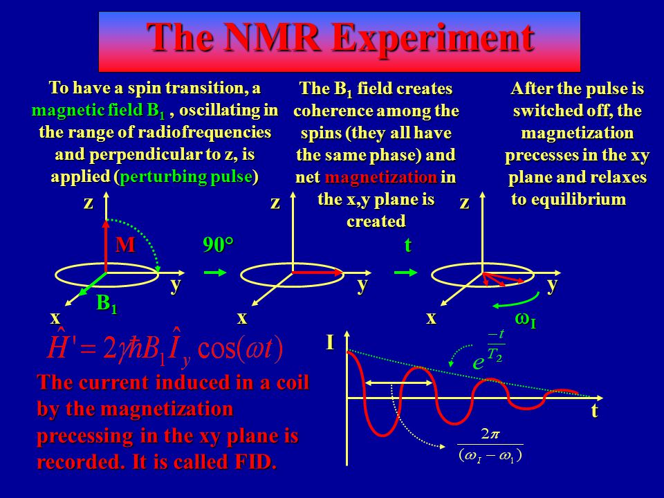 The NMR Experiment After the pulse is switched off, the magnetization precesses in the xy plane and relaxes to equilibrium The current induced in a coil by the magnetization precessing in the xy plane is recorded.