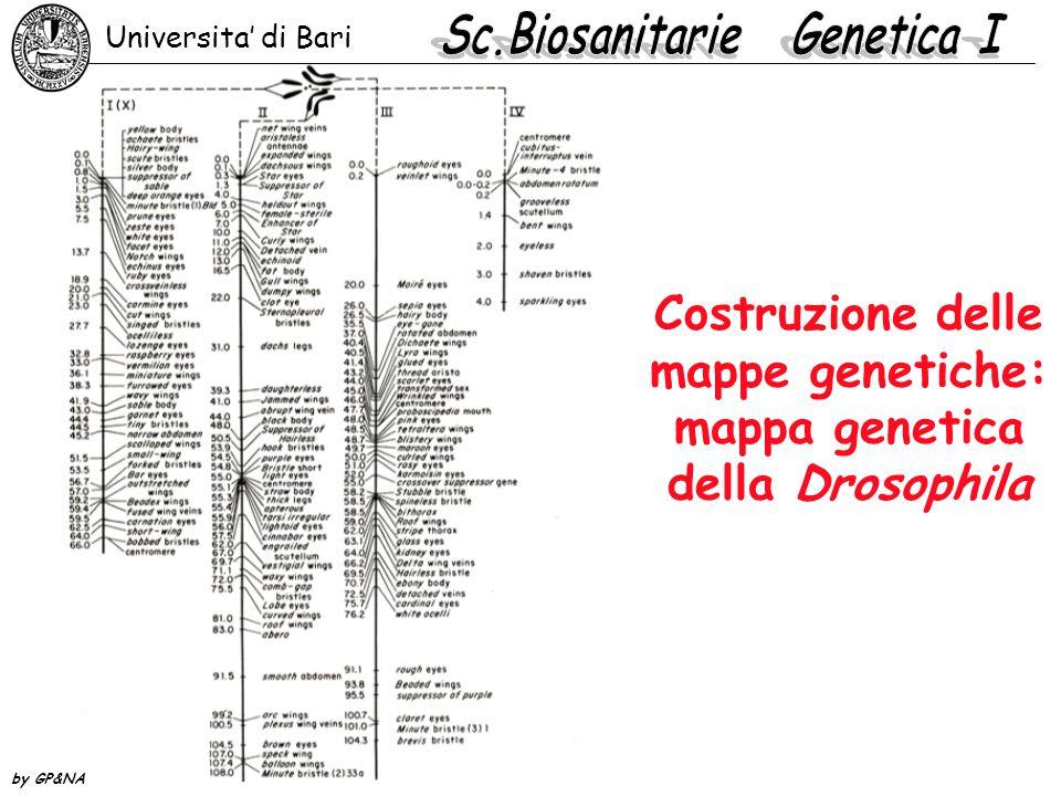 Costruzione delle mappe genetiche: mappa genetica della Drosophila Universita' di Bari by GP&NA