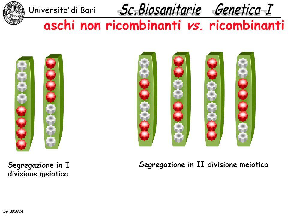 aschi non ricombinanti vs. ricombinanti Universita' di Bari by GP&NA Segregazione in II divisione meiotica Segregazione in I divisione meiotica