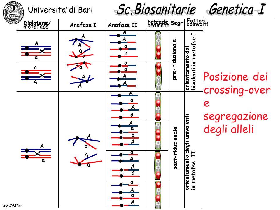 Posizione dei crossing-over e segregazione degli alleli Universita' di Bari by GP&NA A a A a A A a a a a A A A a A a A a A a A a a A A a a A A a a A a