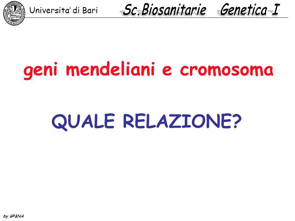 geni mendeliani e cromosoma QUALE RELAZIONE? Universita' di Bari by GP&NA