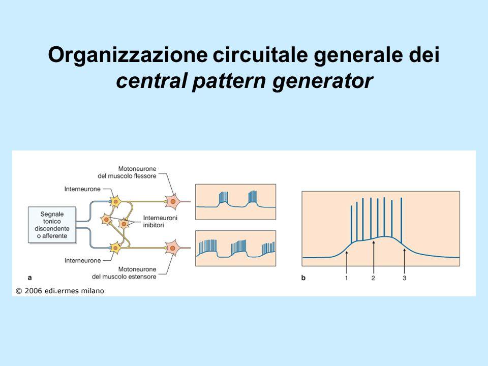 I central pattern generator centrali