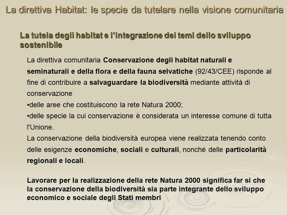 La direttiva Habitat: le specie da tutelare nella visione comunitaria La direttiva comunitaria Conservazione degli habitat naturali e seminaturali e della flora e della fauna selvatiche (92/43/CEE) risponde al fine di contribuire a salvaguardare la biodiversità mediante attività di conservazione delle aree che costituiscono la rete Natura 2000; delle specie la cui conservazione è considerata un interesse comune di tutta l Unione.