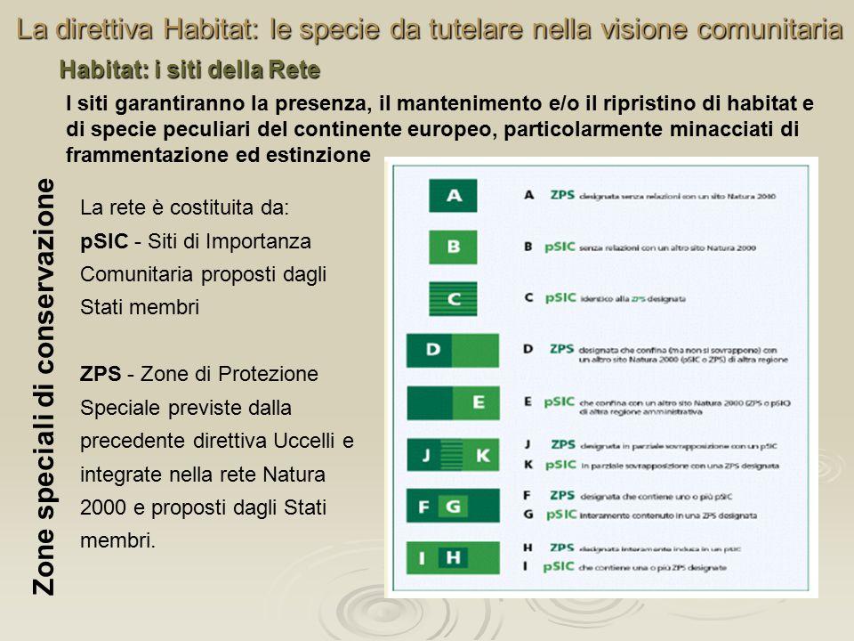 La direttiva Habitat: le specie da tutelare nella visione comunitaria La rete è costituita da: pSIC - Siti di Importanza Comunitaria proposti dagli St