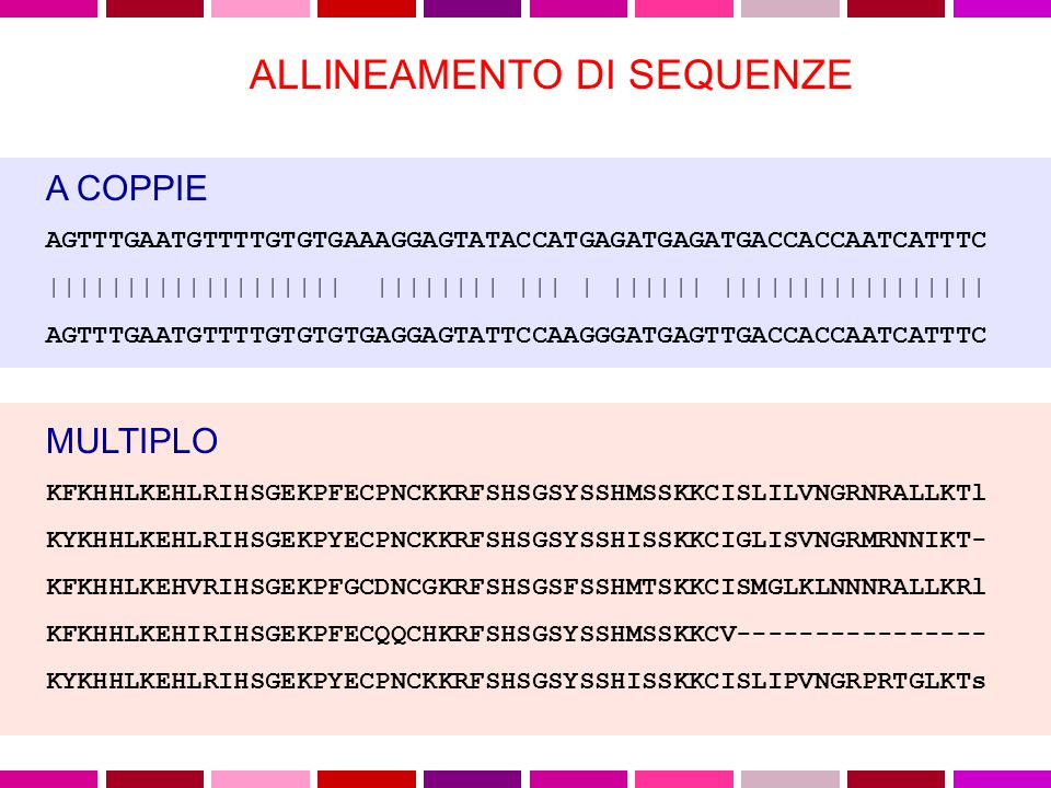 Cosa vuol dire allineare due sequenze (proteine o acidi nucleici).