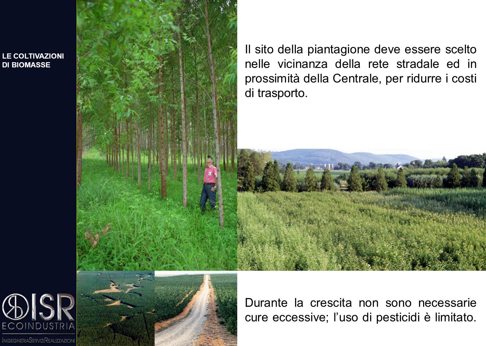 SHORT ROTATION FORESTRY: IL PAESAGGIO Boschi di pioppeti, salici, eucalipti (specie arboree) e miscanto, ginestra, canna comune (specie erbacee), a se