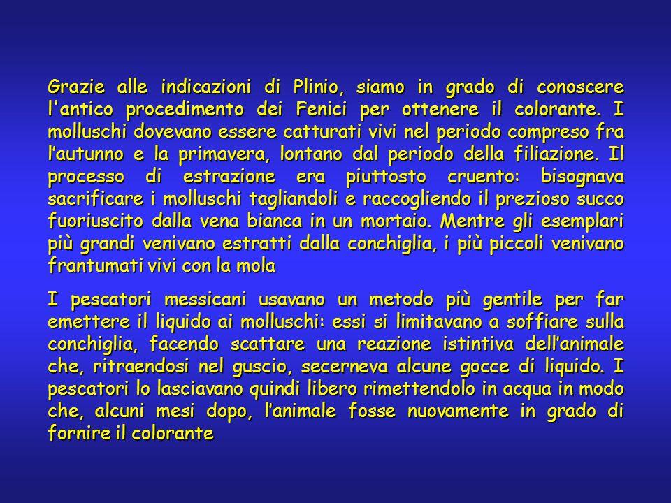 Grazie alle indicazioni di Plinio, siamo in grado di conoscere l antico procedimento dei Fenici per ottenere il colorante.