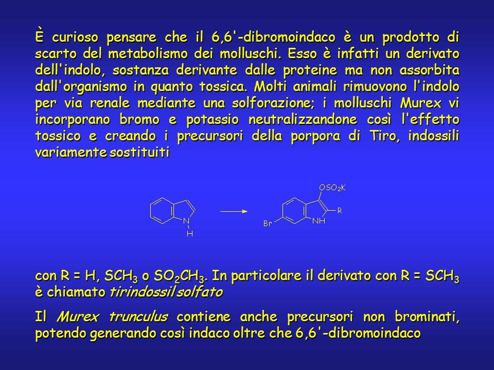 È curioso pensare che il 6,6 -dibromoindaco è un prodotto di scarto del metabolismo dei molluschi.
