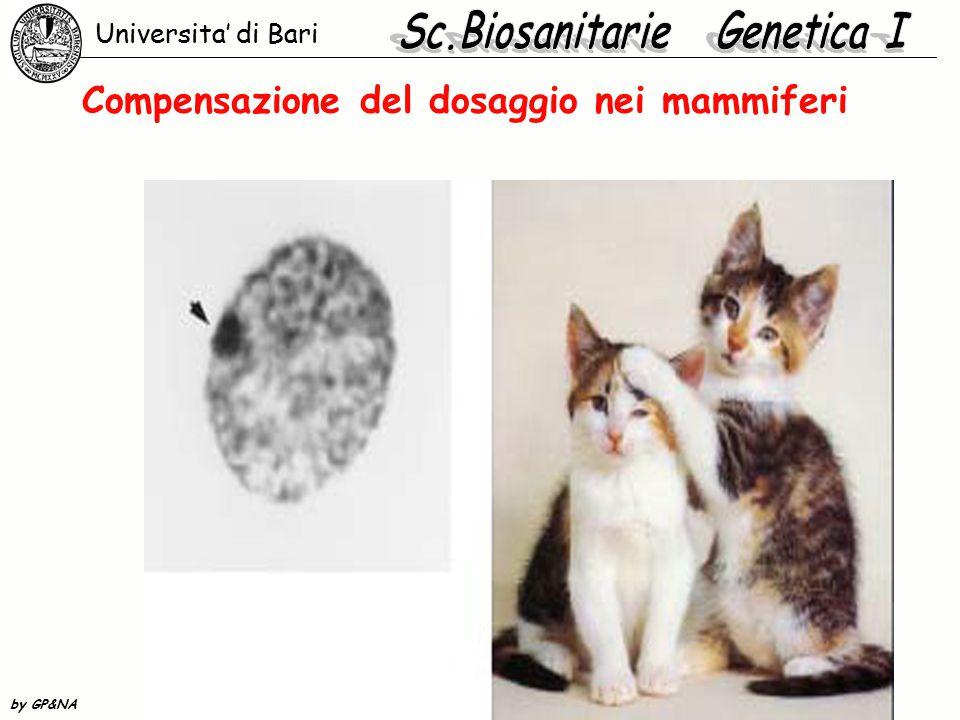 Compensazione del dosaggio nei mammiferi Universita' di Bari by GP&NA