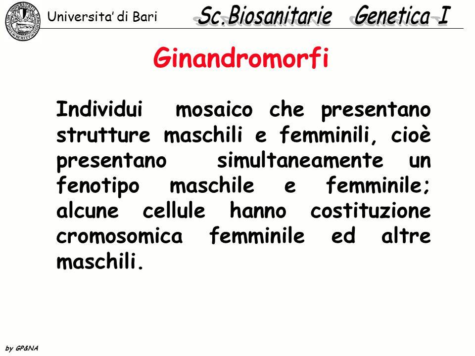 Ginandromorfi Individui mosaico che presentano strutture maschili e femminili, cioè presentano simultaneamente un fenotipo maschile e femminile; alcun