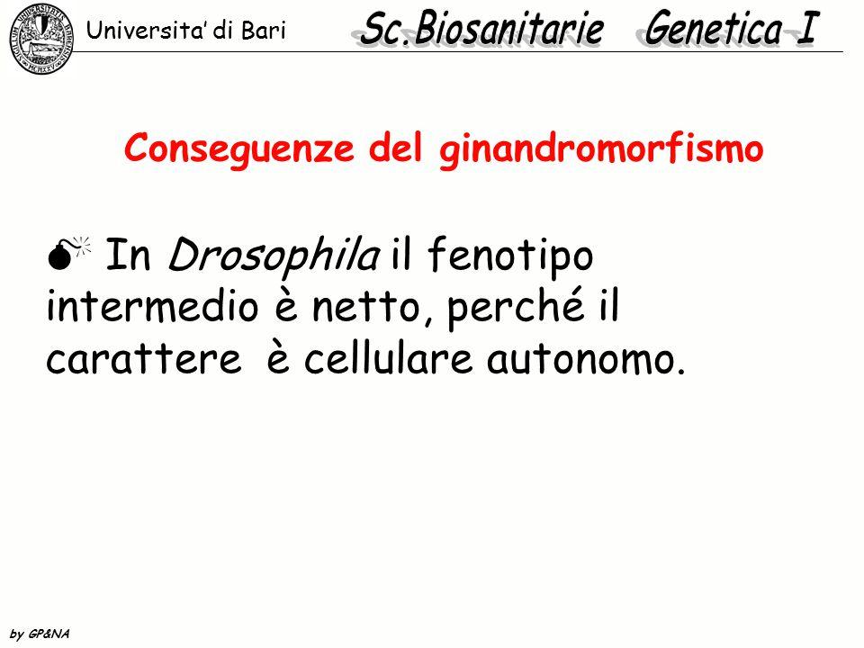 Conseguenze del ginandromorfismo  In Drosophila il fenotipo intermedio è netto, perché il carattere è cellulare autonomo. Universita' di Bari by GP&N