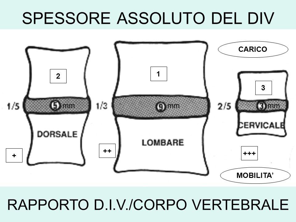 SPESSORE ASSOLUTO DEL DIV RAPPORTO D.I.V./CORPO VERTEBRALE mm 1 2 3 + ++ +++ CARICO MOBILITA'