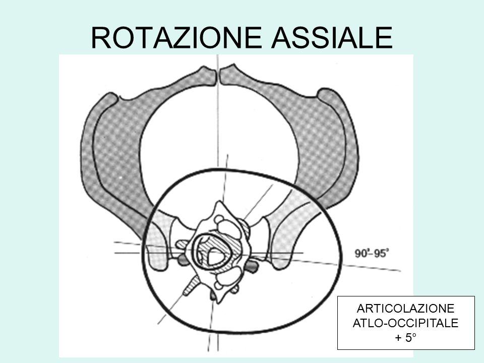 ROTAZIONE ASSIALE ARTICOLAZIONE ATLO-OCCIPITALE + 5°