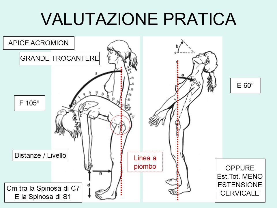 VEDUTA ENDOPELVICA LEG. SACRO-ISCHIATICO PICCOLO GRANDE