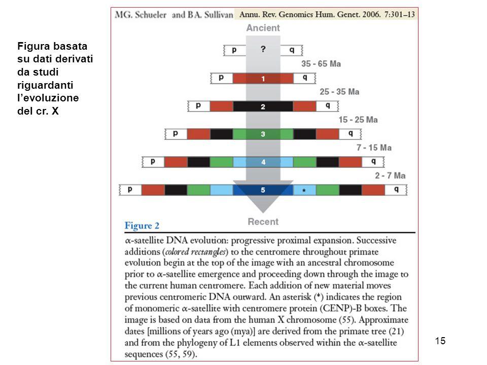 15 Figura basata su dati derivati da studi riguardanti l'evoluzione del cr. X