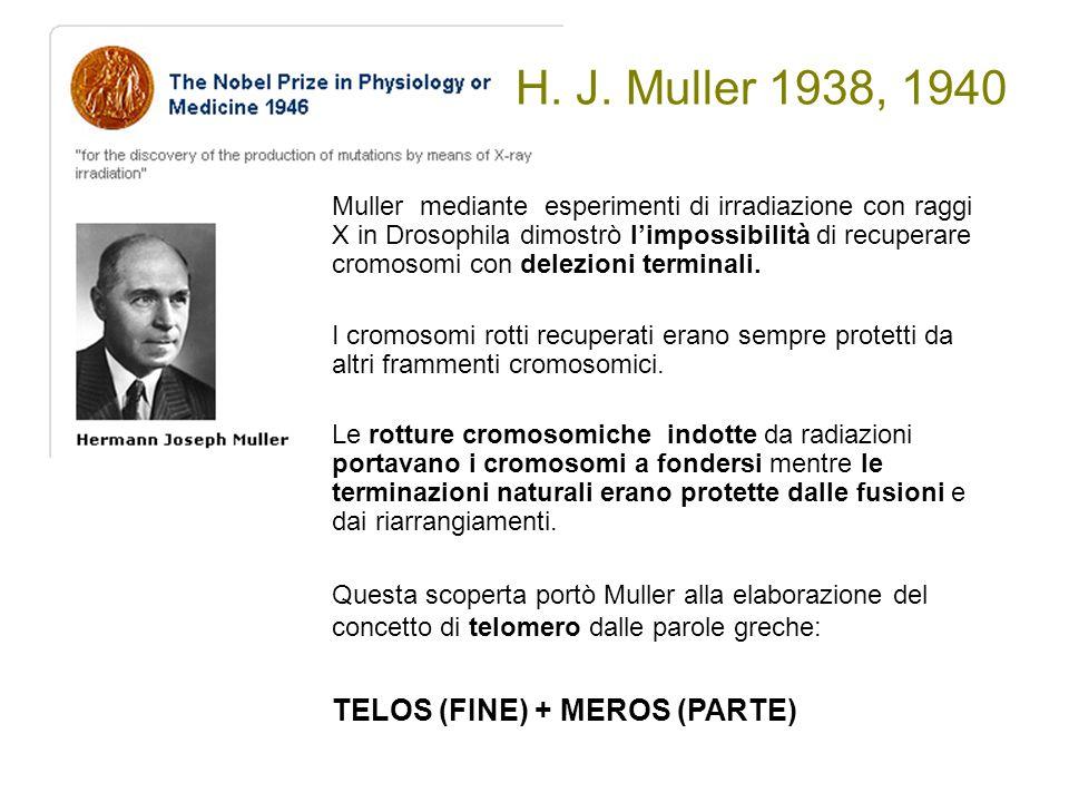 H. J. Muller 1938, 1940 Muller mediante esperimenti di irradiazione con raggi X in Drosophila dimostrò l'impossibilità di recuperare cromosomi con del