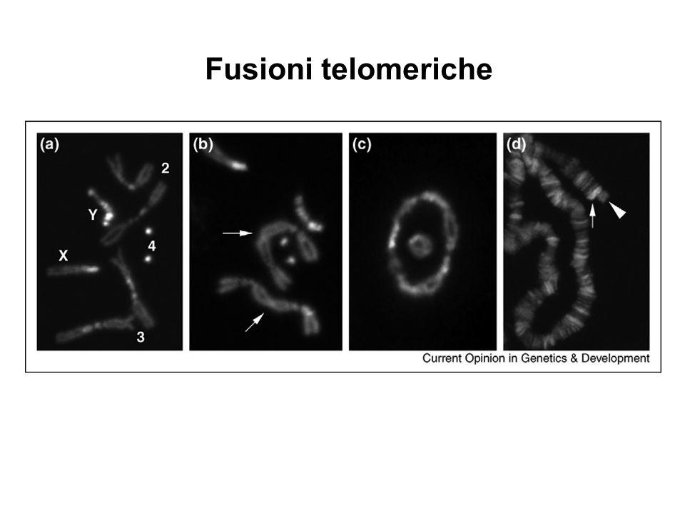 Fusioni telomeriche