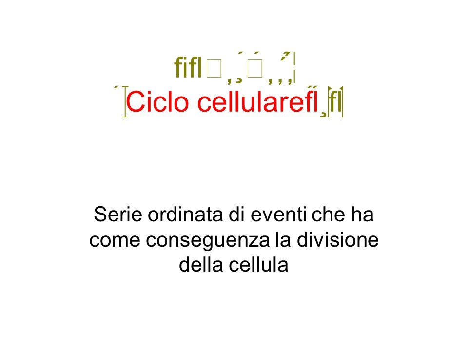  Ciclo cellulare Serie ordinata di eventi che ha come conseguenza la divisione della cellula