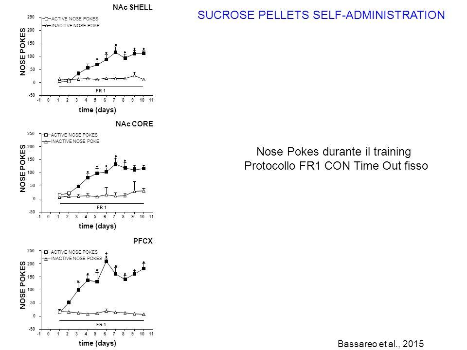 Nose Pokes durante il training Protocollo FR1 CON Time Out fisso SUCROSE PELLETS SELF-ADMINISTRATION 01234567891011 -50 0 50 100 150 200 250 time (day