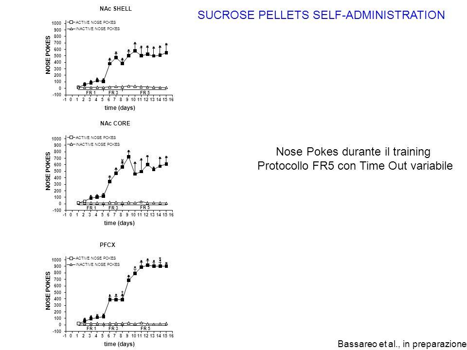 Nose Pokes durante il training Protocollo FR5 con Time Out variabile SUCROSE PELLETS SELF-ADMINISTRATION Bassareo et al., in preparazione