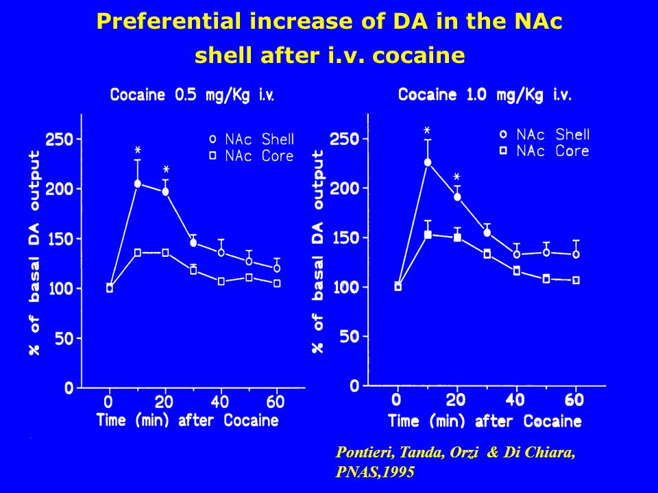 Pontieri, Tanda, Orzi & Di Chiara, PNAS,1995 Preferential increase of DA in the NAc shell after i.v. cocaine