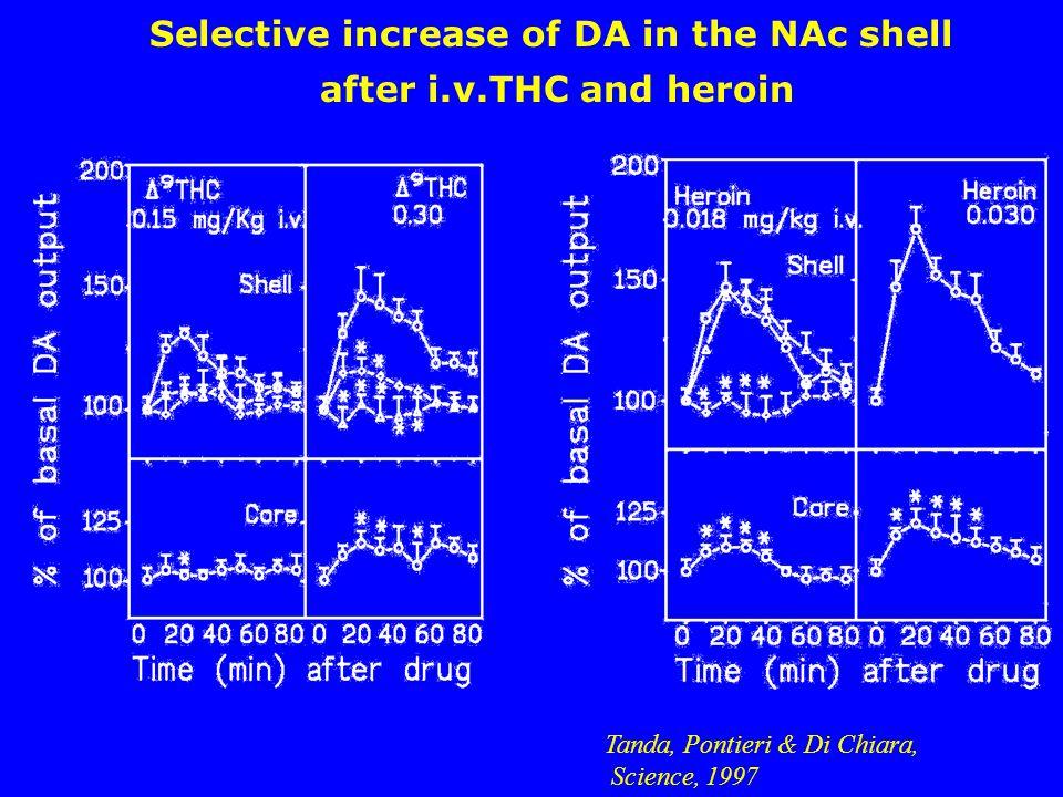 Tanda, Pontieri & Di Chiara, Science, 1997 Selective increase of DA in the NAc shell after i.v.THC and heroin
